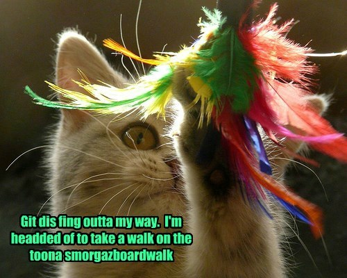 Git dis fing outta my way.  I'm headded of to take a walk on the toona smorgazboardwalk