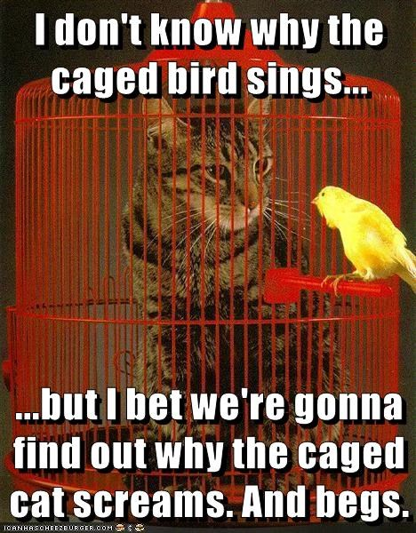 I don't know why the caged bird sings...  ...but I bet we're gonna find out why the caged cat screams. And begs.