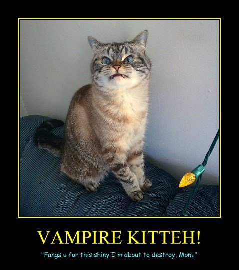 vampire caption Cats - 8749859328