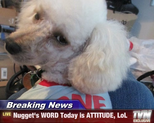 Breaking News - Nugget's WORD Today is ATTITUDE, LoL