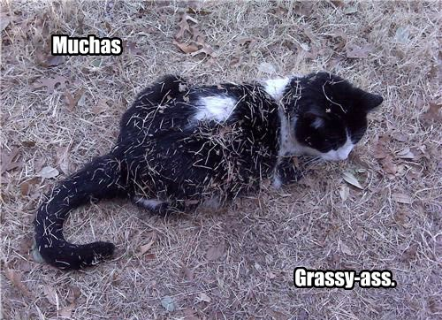 grassy cat gracias caption - 8749892096
