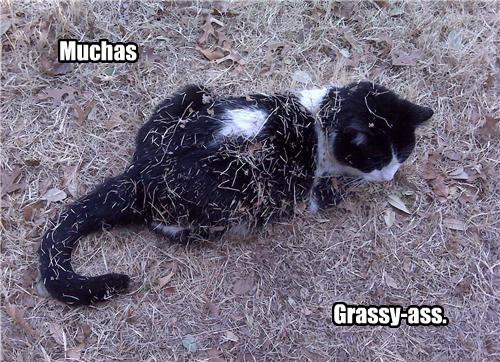 grassy cat gracias caption - 8749892096
