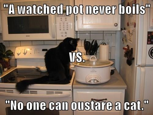 """A watched pot never boils"" VS. ""No one can oustare a cat."""