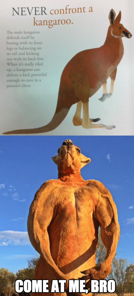 scary ripped kangaroo