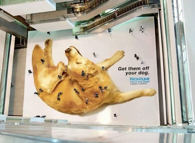 dogs,Ad,fleas