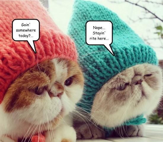 twins caption Cats - 8750018048