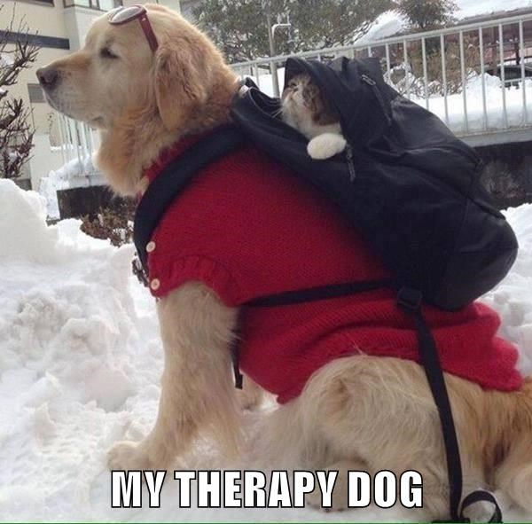 My Therapy Dog I Has A Hotdog Dog Pictures Funny
