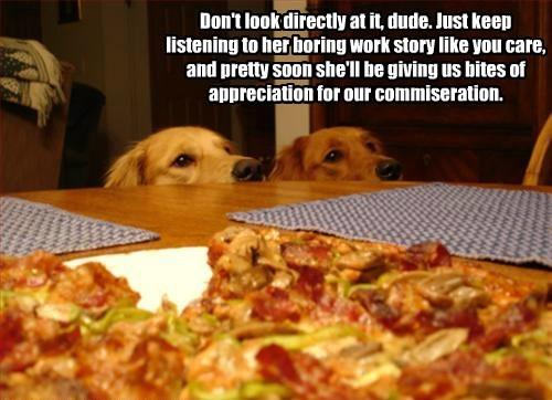 appreciation boring caption bites dogs listening giving story work keep - 8750130432