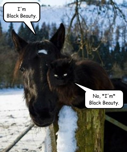 OK, fine, you're *both* Black Beauty.