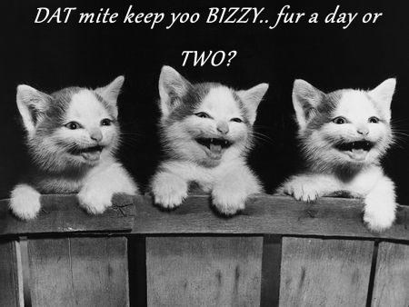 kitten,bizzy,Cats
