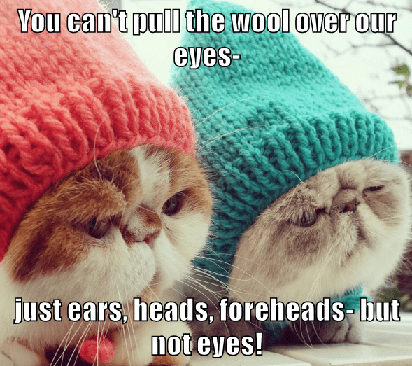 animals hats caption Cats wool