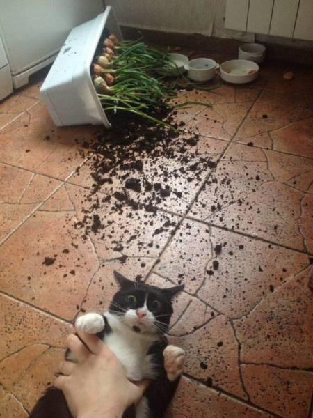 funny cat image cat vs planter