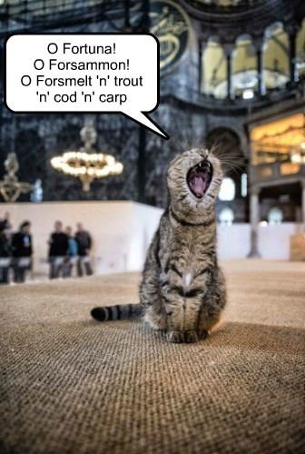 caption Cats - 8750242048