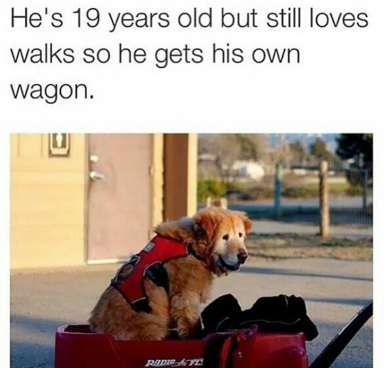 wagon old dogs family love - 8750246400