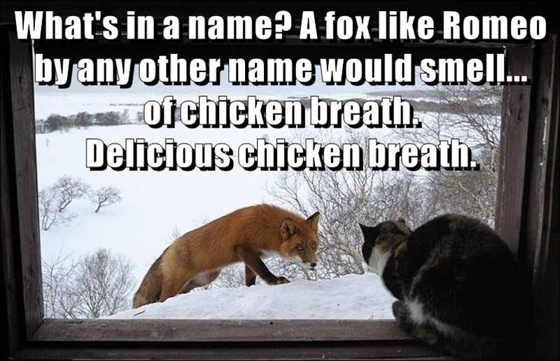 animals cat shakespeare fox - 8750260224