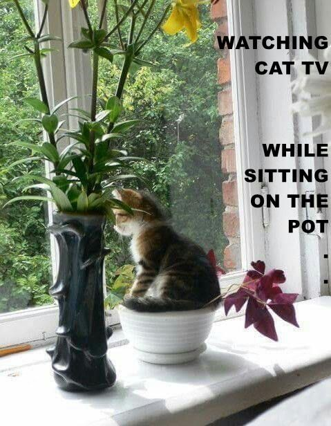 WATCHING                                                CAT TV WHILE                                                      SITTING                                                           ON THE POT