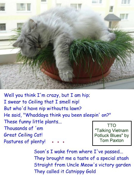"""Catnip Blues"" (TTO ""Talking Vietnam Potluck Blues"" by Tom Paxton)"