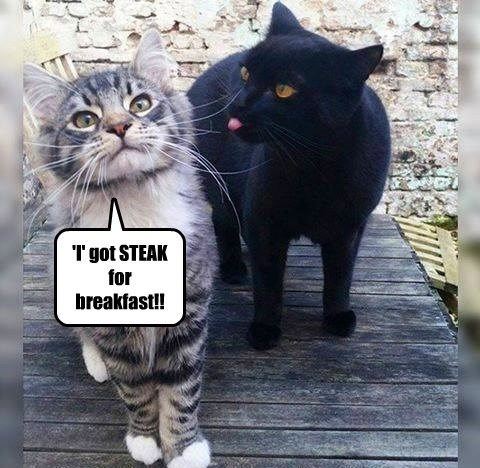 steak breakfast caption Cats - 8750301440