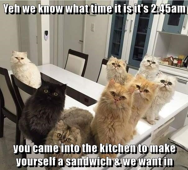 Yeh we know what time it is it's 2:45am  you came into the kitchen to make yourself a sandwich & we want in
