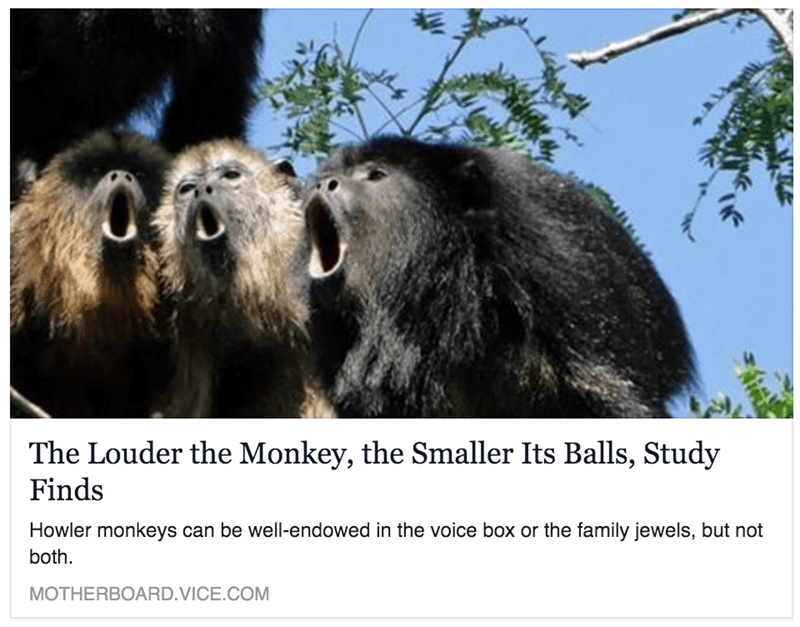 funny memes the louder the monkey