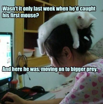 prey caption Cats - 8750371840