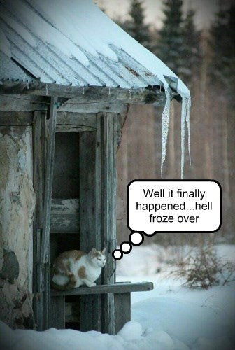 hell frozen caption Cats - 8750408448