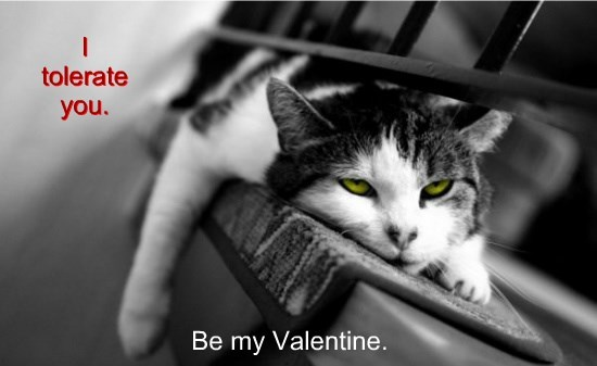 Kitteh Love From Montana~~Happy V-Day!