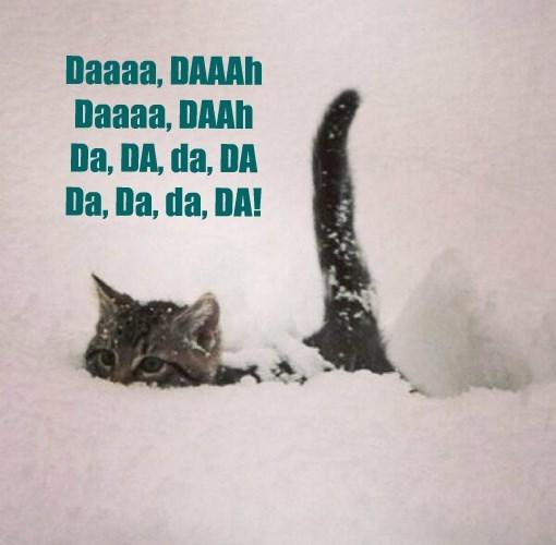 Cats caption jaws