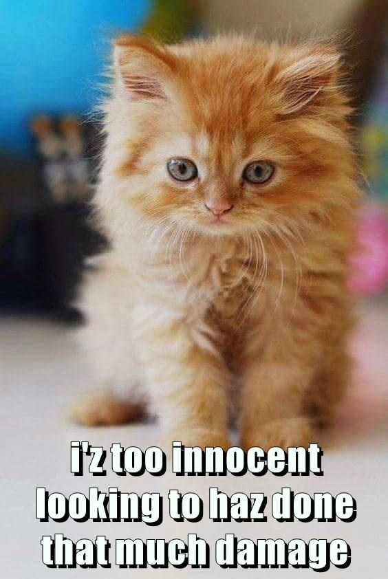 i'z too innocent looking to haz done that much damage