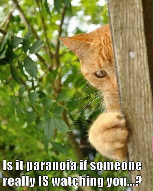 Is it paranoia if someone really IS watching you...?