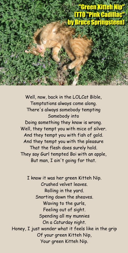 """""""Green Kitteh Nip"""" (TTO """"Pink Cadillac"""" by Bruce Springsteen)"""