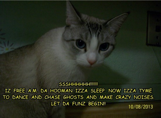 night caption Cats - 8750559488