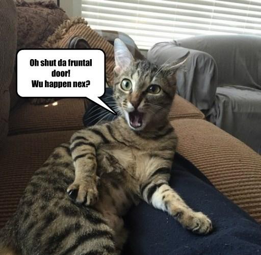 cat,gossip