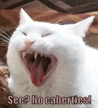 Cats,caption,dentist