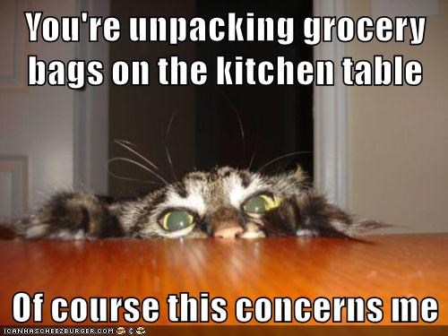 cat,grocery,caption