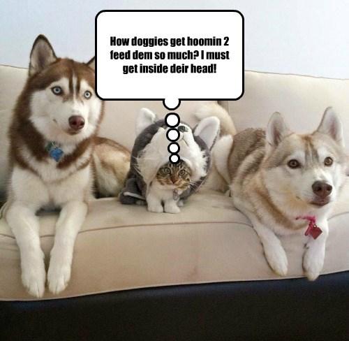 cat inside doggies head human feed caption - 8750585600