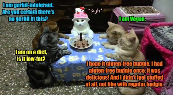vegan caption Cats