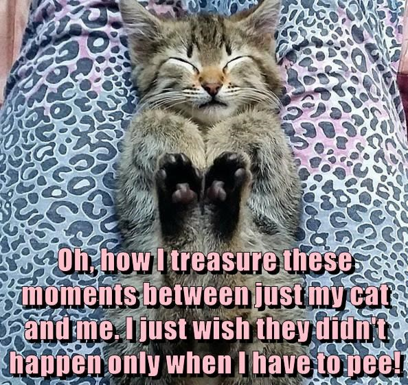 Oh, how I treasure these moments between just my cat and me. I just wish they didn't happen only when I have to pee!
