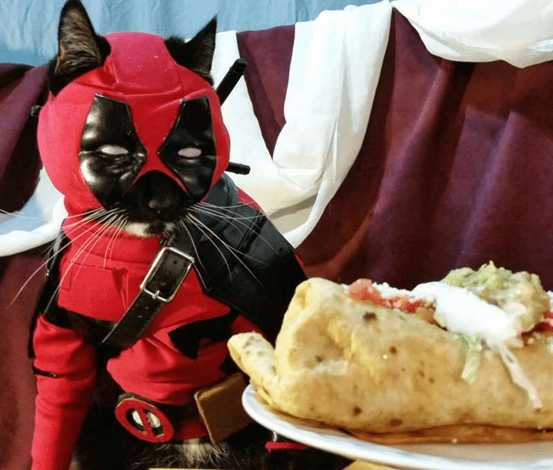 cats cosplay deadpool Forget About Deadpool, Catpool Is the Mercenary You Need to Take Care of Your Rodent Problem