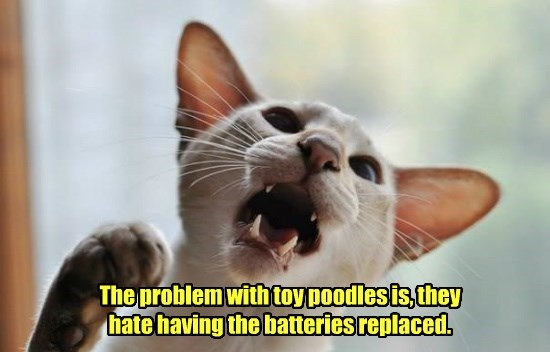 hate,cat,poodles,toy,replaced,problem,batteries,caption