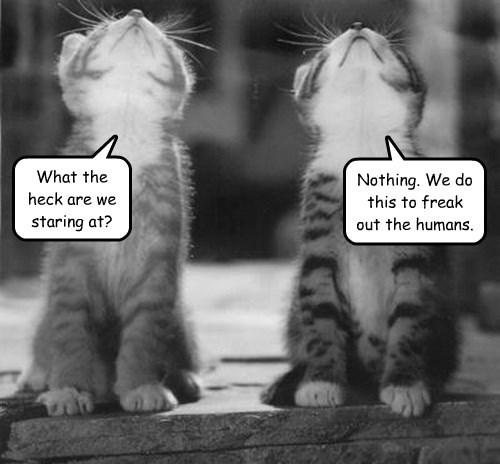 cat kitten - 8750816768