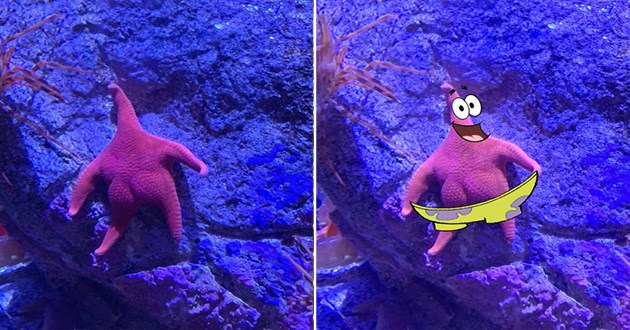 patrick starfish spongebob photoshop