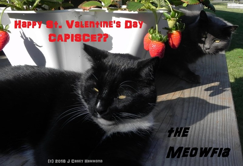 Happy St. Valentines' Day from the Meowfia