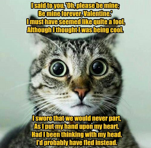 Hindsight A Humorous Valentine Poem By Joanna Fuchs Lolcats