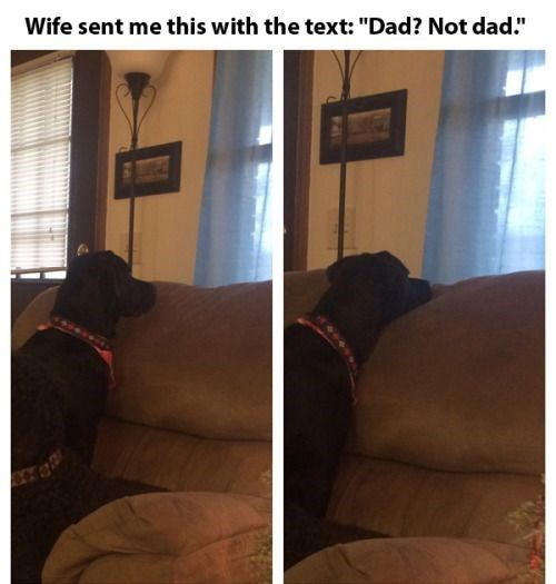 dogs window dad - 8750952192