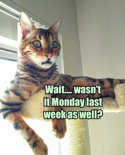 mondays Cats - 8751140352