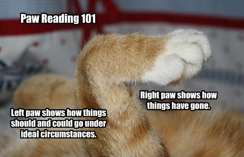 Paw Reading 101 Left paw shows how things should and could go under ideal circumstances. Right paw shows how things have gone.