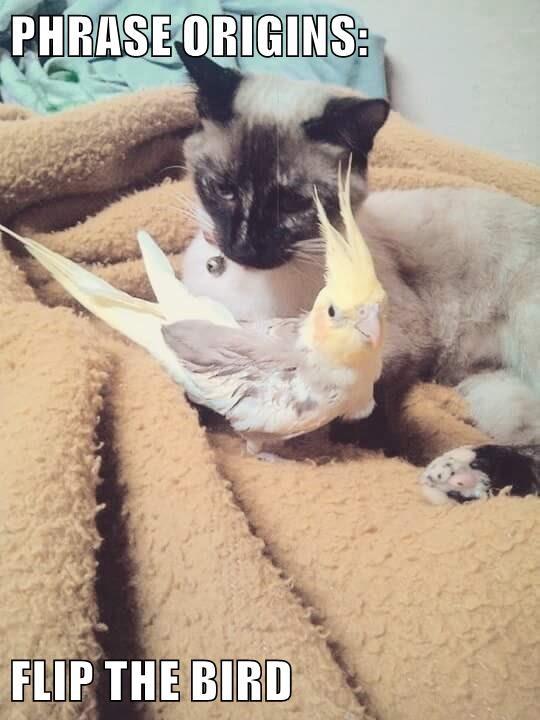 animals cat bird - 8751184384