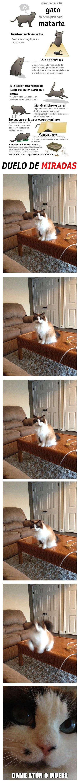 Conociendo a tu gato