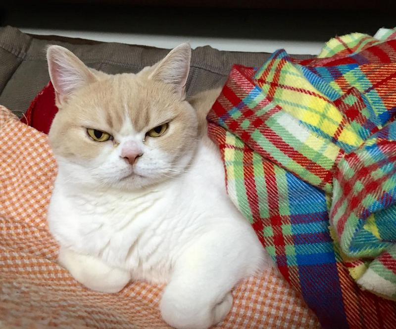 frowning cat - Cat - a koyuki